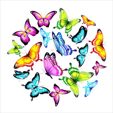 bellissime farfalle di colore, impostare, isolato su un bianco