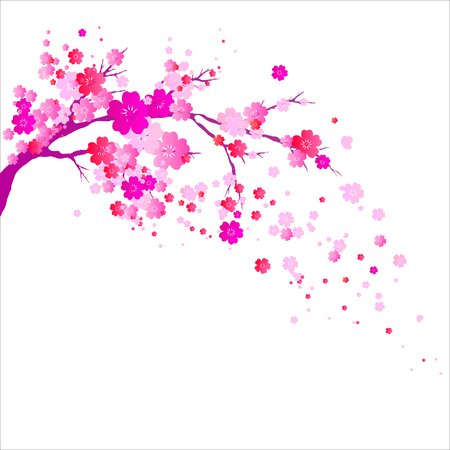 pink flowers tree, spring blossom, on a white