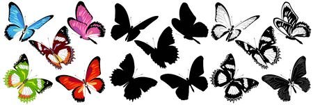 black and colors butterflies, isolated on a white