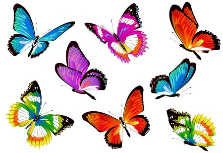 beautiful color butterflies,set, isolated  on a white Vectores