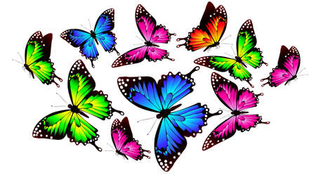 beautiful color butterfly, isolated on a white Vector Illustration