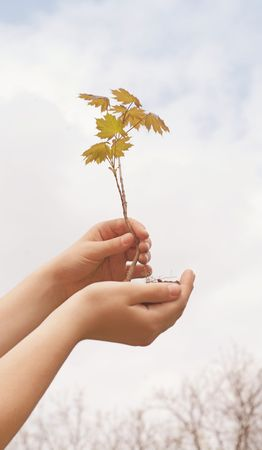 Small tree in cupped hands  Stock Photo