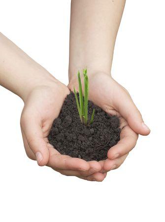 evolucion: Manos humanas celebrar y preservar una planta joven