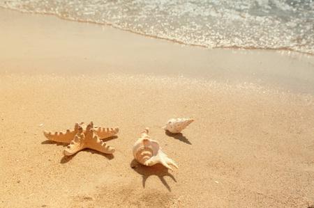 conchas: Shell de mar en la playa  Foto de archivo