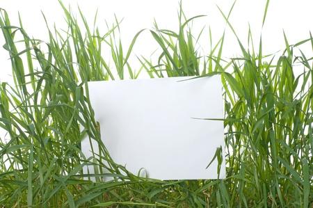 blade of grass: Rectangular white sign amongst fresh green grass blades  Stock Photo