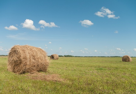 haystack on a field  photo