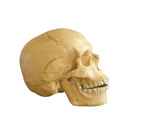 eye socket: Human skull model