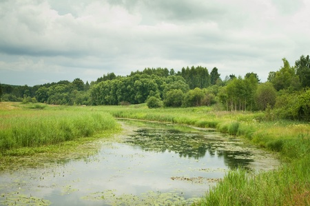 swamp: Swampy lake with lilies