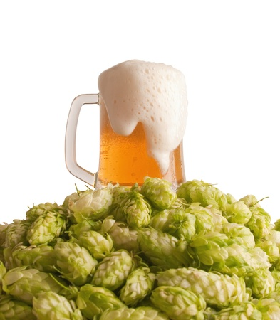 brew beer: A glass with beer and a hop isolated on a white background
