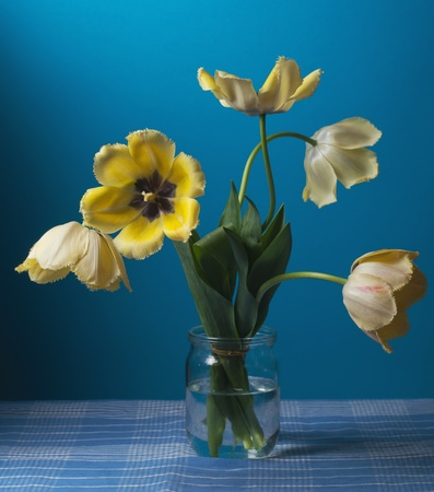 Still life with yellow tulips photo
