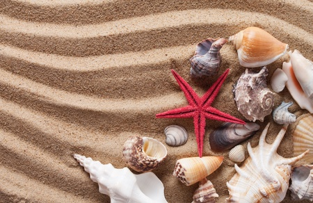 Beach with a lot of seashells and starfishes  photo
