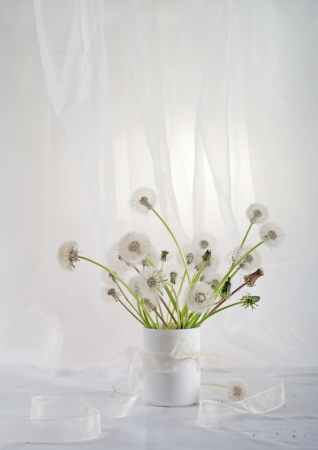 Stillife with dandelions  photo