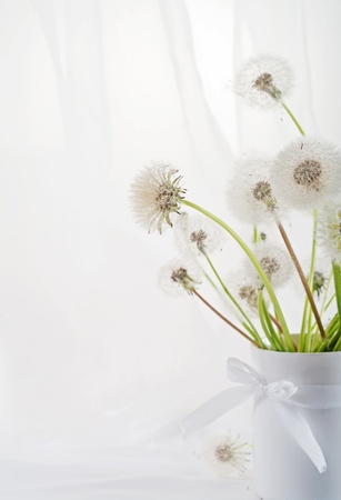 Stillife with dandelions