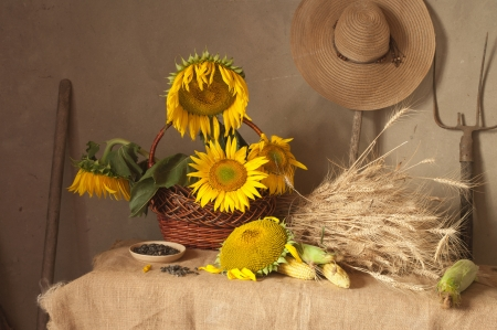 still life with sunflowers, wheat and corn Stock Photo - 14685070