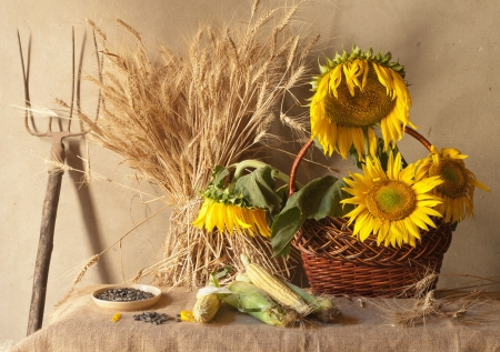 still life with sunflowers, wheat and corn photo