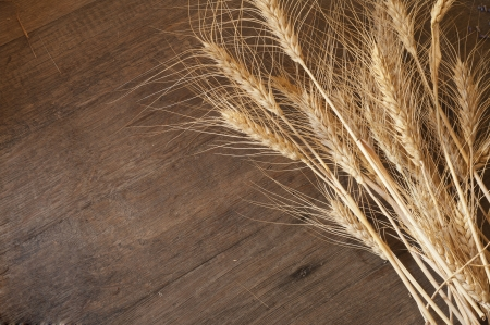 farinaceous: golden wheat on the old wooden background