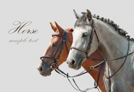 dressage: Two horses