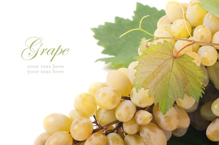 Grapes branch isolated on white background Stock Photo - 16024032