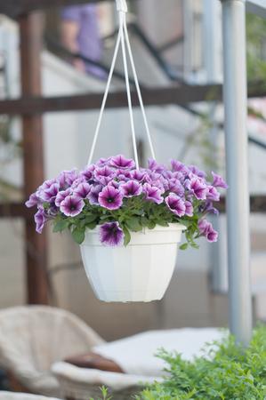 Hanging flower pots Stock Photo