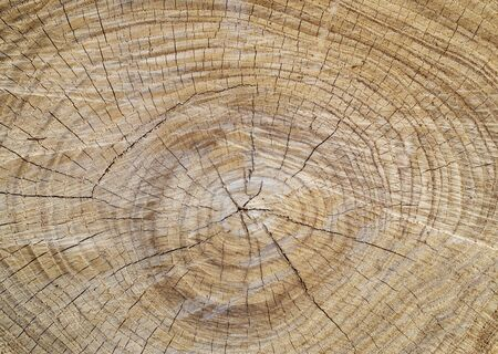 barks: annual rings on a tree trunk Stock Photo