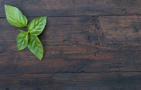 albahaca: Albahaca verde sobre un fondo de madera oscura Foto de archivo