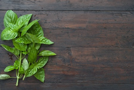basil: green Basil on a dark wood background Stock Photo