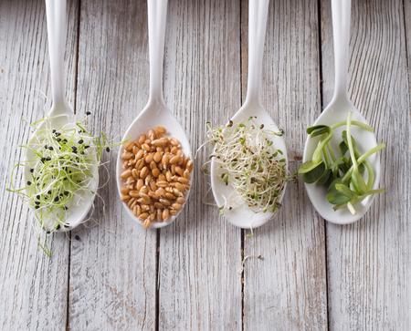 germinated seeds of alfalfa, wheat, onions, sunflower 스톡 콘텐츠