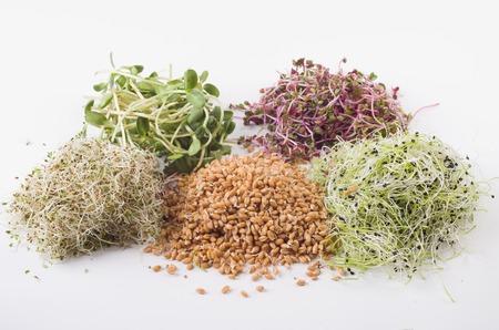Gekiemde zaden van alfalfa, tarwe, uien, zonnebloem, radijs
