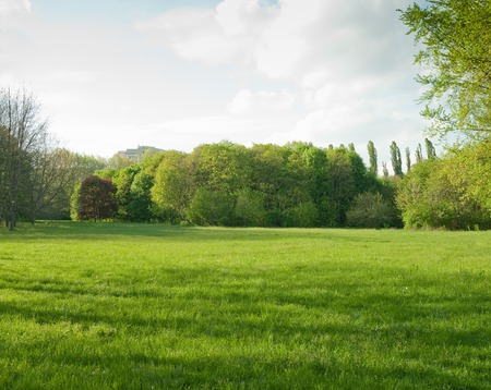 Beautiful meadow and tree in the park Stock Photo