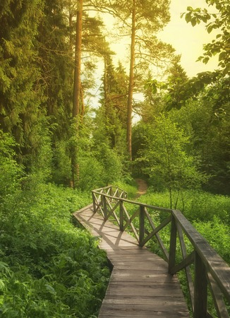 magical forest: wooden pathway bridge in  forest