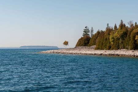 A tree in Flowerpot island photo