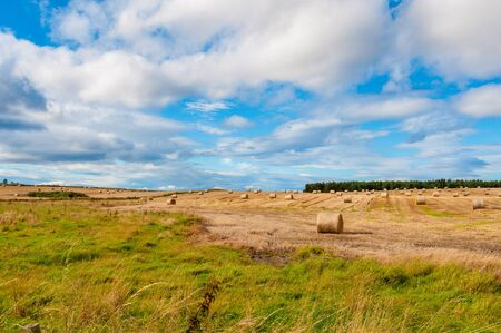 Scottish landscape, hay rolls