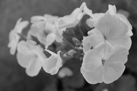 wallflower: Blooming wallflower