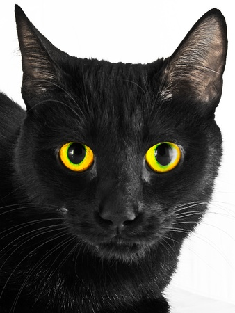 A close up black cat portrait against white background