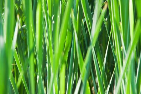 Green grass background Stock Photo - 20297027