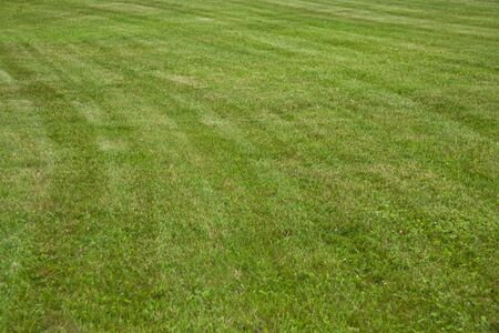 Geometrical curves in the green grass just trimmed