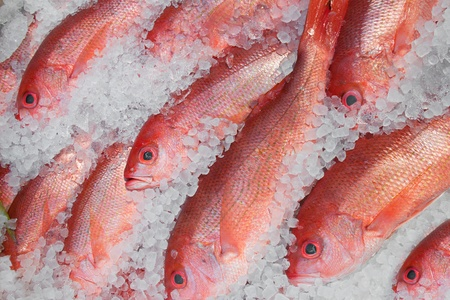 Red fish are shown on display on ice  Stock Photo