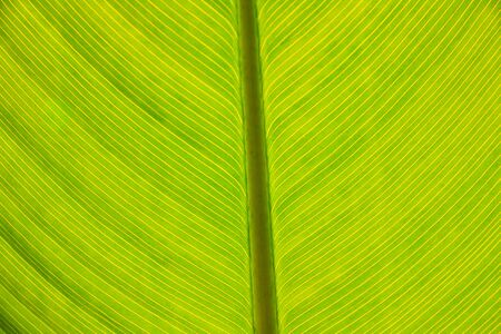 Closeup of a green large leaf Stock Photo - 20437377