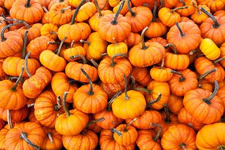 Halloween pumpkin raw background