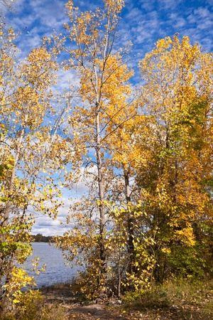 Yellow leafs trees near the river side against the blue sky with clouds