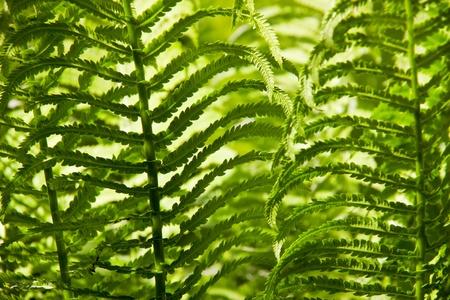 Fern leafs background Stock Photo