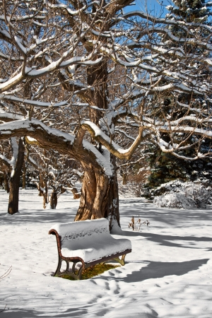 A bench  a tree, full of snow all around  but under the bench is still green grass Stock Photo - 20556122