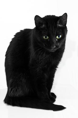 resemblance: Black cat portrait against white background