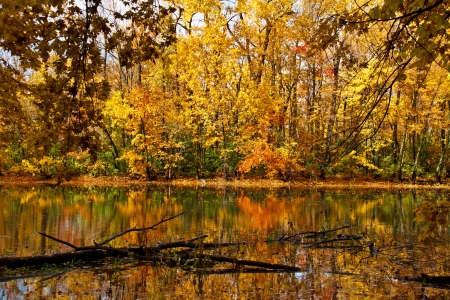 Fall full of colors forest with reflections in the mirror of the water