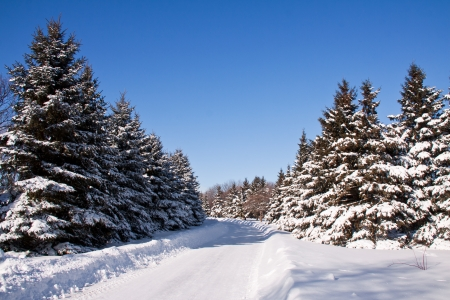 Winter landscape with a lot of snow and a road who cut the pine trees forest