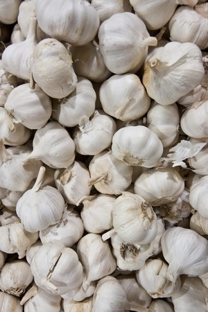 A lot of garlic like background Stock Photo - 20832485