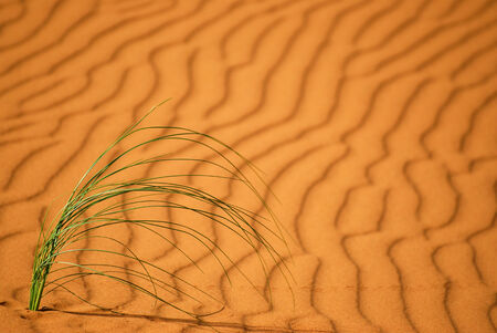 grass growing on sand in the desert