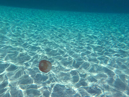 Jelly fish swiming in a crystal clear Mediteranean Waters Standard-Bild