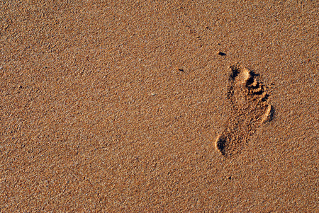 zoom on a baby footprint on wet sand Standard-Bild