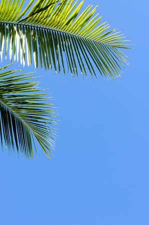 The blue sky and coconut trees, Blue sky on summer